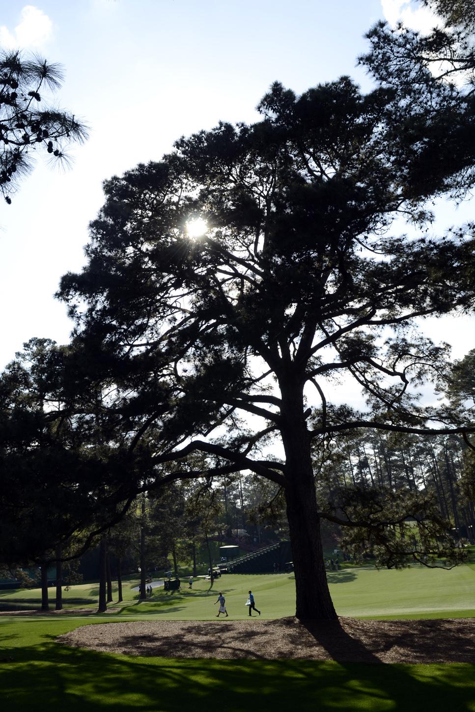 Augusta National's Eisenhower Tree removed after storm damage